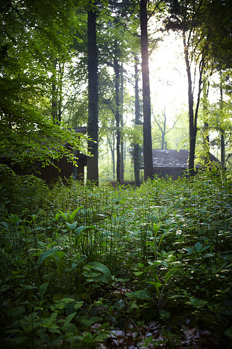 Forest Of Dean 2