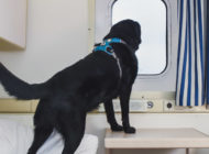 Dog On Ferry