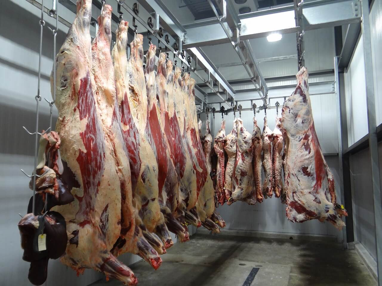 Slaughterhouse Meat Processing Plant Pixabay Free To Use